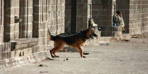 šuo,leashed,šuns pavadėlis,vieta,vienas,naminis gyvūnėlis