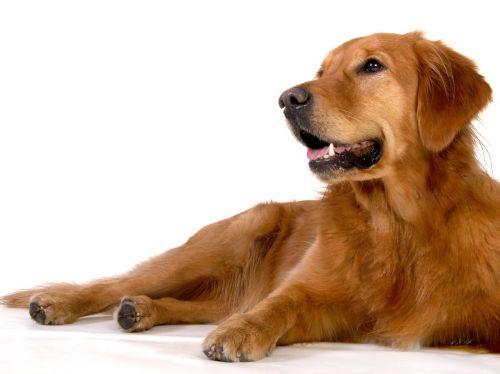 šuo,gyvūnas,naminis gyvūnėlis,lenktynės,Draugystė