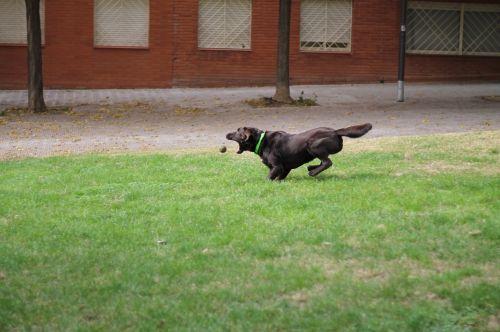 šuo,greitis,rutulys
