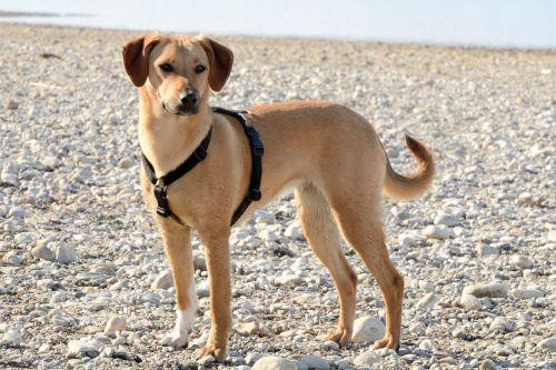 šuo,jaunas šuo,mielas,hibridas,gyvūnų portretas,ruda,jaunas,dėmesio,jaunas gyvūnas,naminis gyvūnėlis,žaismingas,Keturiasdešimt