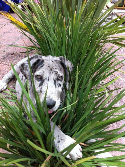 šuo,augalai,slėpti,naminis gyvūnėlis,šuniukas,labai danes