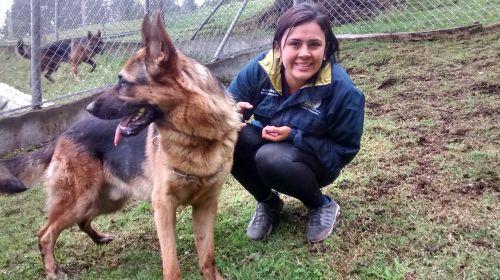 šuo, labradoras, naminis gyvūnėlis, sėdintis šuo, naminis sėdimasis, šunys poilsio, auksas, Auksaspalvis retriveris, gyvūnai, poilsis, vokiečių aviganių šuo, veterinarijos piemenys, veterinarija, paklusnus šuo, gyvūnas, gamta, dėmesingas
