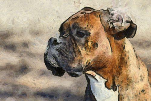 šuo, nuotrauka, snukis, naminis gyvūnėlis, šunys, veislė, žmogaus draugas, laimingas, Draugystė, draugas, figūra, gyvūnai, šuniukas, gyvūnas