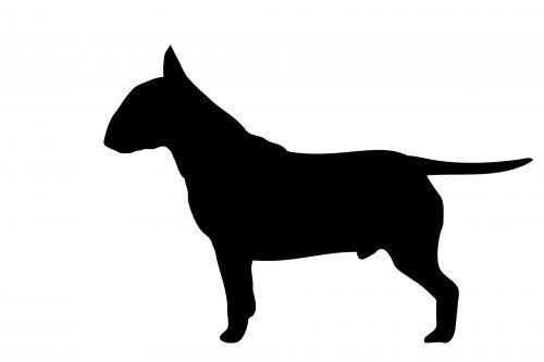 šuo, bull & nbsp, terjeras, Anglų & nbsp, bulių & nbsp, terjeras, terjeras, šikšnosparnis, šunys, gyvūnas, naminis gyvūnėlis, juoda, siluetas, kontūrai, figūra, menas, iliustracija, balta, fonas, profilis, Laisvas, viešasis & nbsp, domenas, šuo, bulvarinis terjeras juodas siluetas