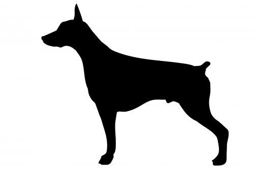 šuo, Dobermanas, šikšnosparnis, šunys, gyvūnas, naminis gyvūnėlis, juoda, siluetas, kontūrai, figūra, menas, iliustracija, balta, fonas, profilis, Laisvas, viešasis & nbsp, domenas, šuo, Dobermanas juodas siluetas