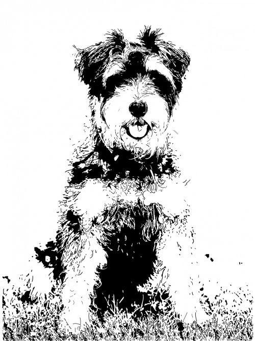 šuo, menas, iliustracija, rašiklis, rašalas, rašiklis & nbsp, rašalas, šnauzeris, miniature & nbsp, šnauceris, gyvūnas, naminis gyvūnėlis, šunys, juoda, balta, Scrapbooking, Laisvas, viešasis & nbsp, domenas, šuo švirkštimo priemonė & amp, rašalo iliustracija