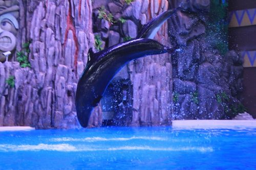 delfinas,spektaklis,šokinėja
