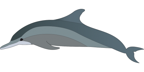 delfinas,gyvūnas,žuvis,Jūros gyvenimas,maudytis,vandenynas,jūros žinduolis,žinduolis,jūrų,nemokama vektorinė grafika