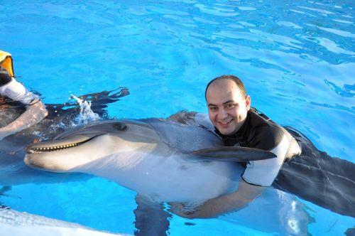 delfinas,Draugystė,taika,maudytis,gyvūnas,jūra