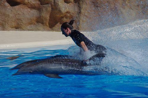 delfinas,jūrų žinduoliai,vanduo,delfinai,plaukti,greitai,vandens malonumas,greitis,aktyvus,malonumas,Rodyti,moteris,demonstracija,delphi rode