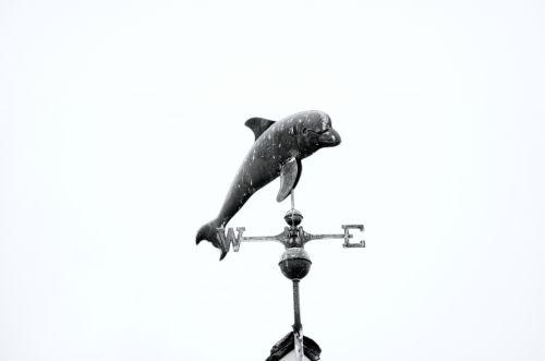 oras & nbsp, vėjui, vėjarodis, banginis, metalas, skulptūra, oras, dangus, varis, delfinas, delfinai, žuvis, prognozavimas, Šiaurė, vakaruose, rytus, į pietus, kryptis, apdaila, dekoruoti, ornamentas, delfinų oras