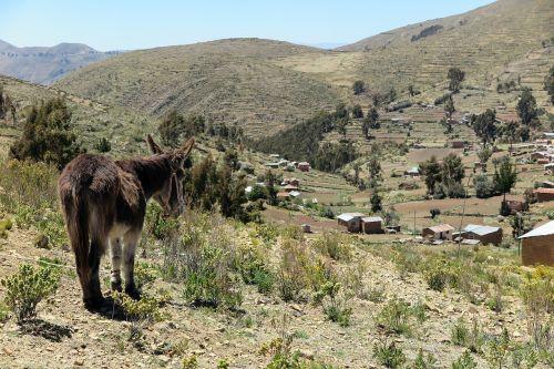 asilas,chisi,kraštovaizdis,Žemdirbystė,Bolivija,kaimas,gamta,scena,Bolivija,kelionė,kalvos,laukai,aukštas,ganykla,inca,ūkis,vaizdingas,titicaca,terasa