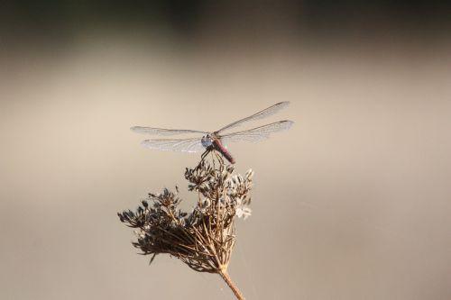 lazda,vabzdys,Uždaryti,gamta,padaras,sparnas,gyvūnas,laisvė,sparnas,skristi,skrydis,ruduo