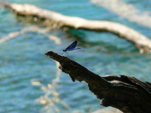 lazda,vabzdys,mėlynas,trapumas,gamta,momentas,tyla