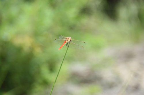 lazda,vabzdžiai,gyvūnas,vasara,kalnas,miškas,Laisvas,prispausti,lazda gale,lazda galinė būsena