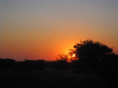 saulėlydis, oranžinė, giliai, intensyvus, dramatiškas, siluetas, medis, veld, dangus, dramatiškas saulėlydis