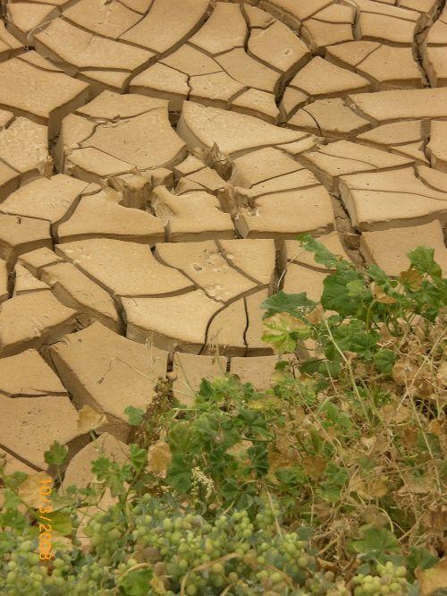 sausra,sausas periodas,molis,įtrūkimai,krekingo,dehidratuotas,dykuma,molio indelis,gamta