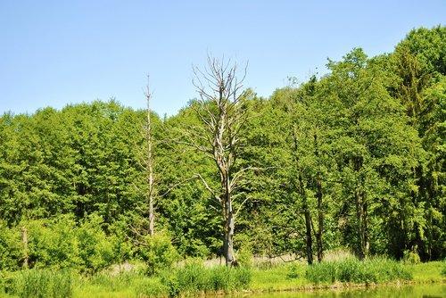 sausra, medis, pušis, estetinis, smėlis, senas medis, kraštovaizdis, dykuma, miręs medis, grove, pobūdį, Wychudzony medis, mediena, sausas, nesukalbamas, metai, šakos