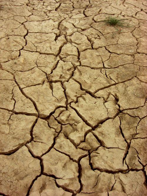 sausas,žemė,dehidratuotas,žemė,įtrūkimai,gamta,sausra,purvas,krekingo,molis,augalas,molio dirvožemis,struktūra,purvinas,nusiaubtas,pasaulinis atšilimas,sausas dirvožemis,ruda