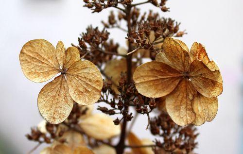 sausos gėlės,žiema,gamta,augalas,lapai,Niekas,sezonas