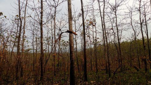 sausas miškas,deginantis miškas,ekosistemos,java,miškas,šiluma,karštas,Laukinė ugnis,degios