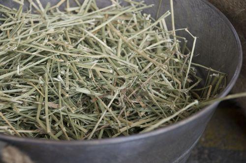 sausa žolė,žolės šeima,šienas,arklys,arklio kanopas,pasagos,shed,šiaudai,ūkis,krepšelis