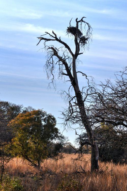 sausas medis,safari,žaidimų ūkis,paukščio lizdą