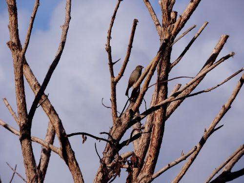 sausas medis,šakelės,medis,ruduo,kraštovaizdis,gamta,medžiai,senas medis