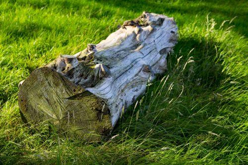 sausas, bagažinė, medis, medis & nbsp, bagažinė, žolė, žalias, kraštovaizdis, gamta, natūralus, vasara, sausas medžio stiebas ant žolės