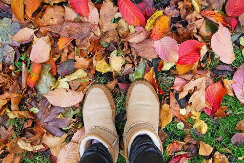 dublin,Airija,kritimas,lapai,sezonas,gamta,spalva,spalvinga,geltona,oranžinė,lapija,raudona,ruduo,parkas,klevas,sezoninis,rudens,Europa