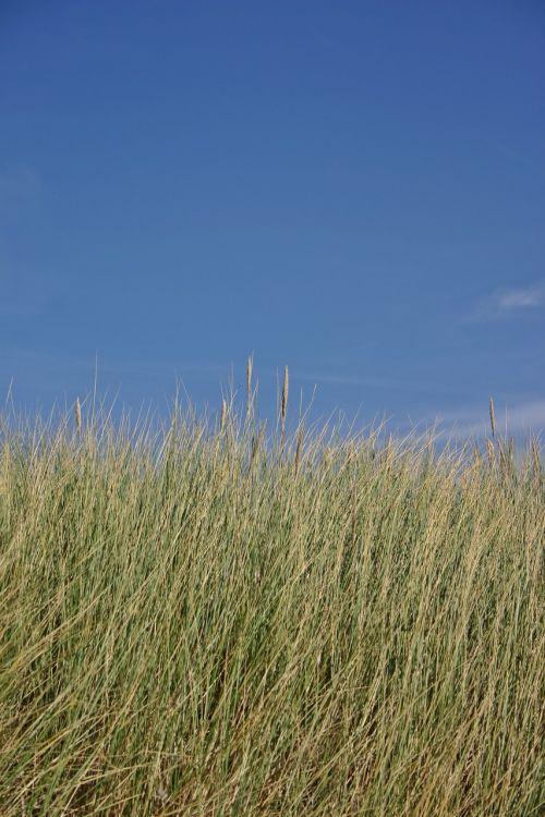 kopos žolė,kopos,žolė,gamta,jūros žolė,Šiaurės jūra,jūra,kranto,papludimys,žolės,bankas,kraštovaizdis,Nyderlandai,vasara,augalas,dangus