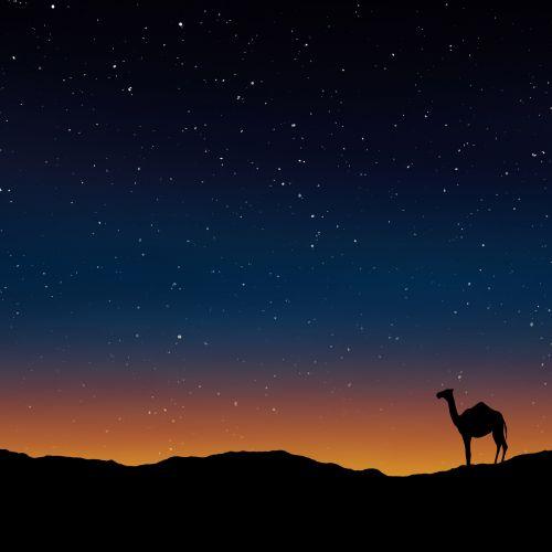 kupranugaris, oman, Egiptas, Marokas, tapetai, šiltas, natūralus, diena, žemyn, geltona, smėlis, kopos, horizontas, sausra, sahara, peizažas, galas, dusk, twilight, saulė, trūksta, saulės šviesa, sausas, klimatas, mažai, dykuma, saulėlydis, tylus, dykuma, dusk ir kupranugaris