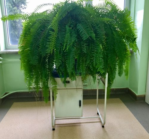 gėlė, žalias, augalas, fonas, stalas, gamta, flora, didelis žalias papartis