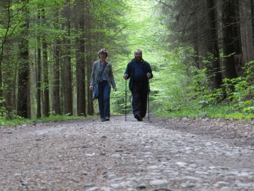 miškas, kelias, žmonės, du keliuose