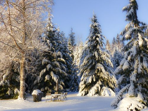 anksti,žiema,svajonė,sniegas,šaltas,Kanim ežeras,Britų Kolumbija,Kanada,peizažas,kraštovaizdis,gamta,medžiai,stiprus sniegas,miškas,sezonas,saulėtas