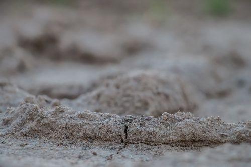 žemė,žemė,žolė,gamta,įtrūkimai,krekingo,sausra,purvas,ruda,ariamasis,miško paklotė,ruduo,dehidratuotas,Žemdirbystė,šaknis,nyksta žemė,sausas dirvožemis,pagrindinė žemė