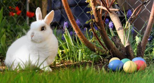 Velykos,kiškis,balta,Velykų kiaušiniai,kiaušinis,spalvinga,pieva,atvirukas,Velyku Triusis,triušis,Velykų lizdas