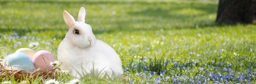 Velyku Triusis,Velykų lizdas,kiaušinis,spalvinga,triušis,žolė,gamta,Velykos,kiškis,pavasaris,Velykų kiaušiniai,apdaila,Velykinis sveikinimas,spalvos,Velykos tema,deko,Velykų dekoracijos,Velykų sveikinimai,gėlės,pieva,parkas,osterkarte