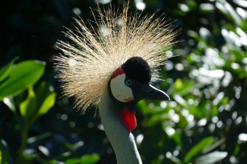 rytas,galva,galvos apdangalai,graciale,paukščio parkas,Walsrode,parkas,makro,paukščių parkas Walsrode,paukštis