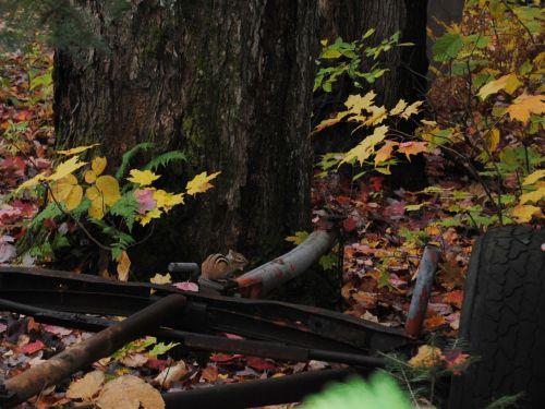 burundukas, voverė, gyvūnas, ruduo, lapai, lapai, sezonas, spalva, raudona, spalva, spalvinga, klevas, medis, gamta, rytinė burundukas