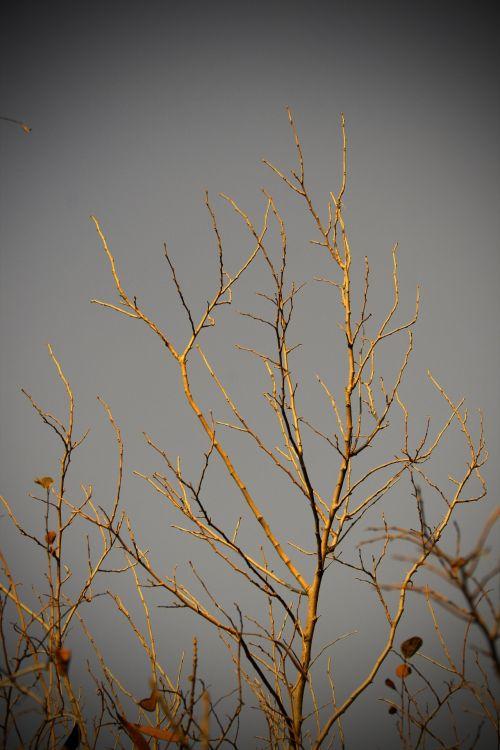 filialai, plikas, dangus, baisus, siaubingas švytėjimas ant plikotų šakų