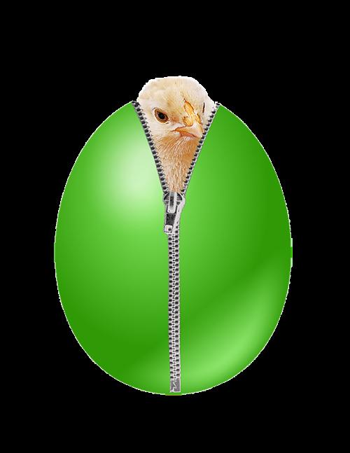 kiaušinis,viščiukai,vištiena,kiaušinio plekšnė,Velykinis kiaušinis,Velykos,Velykinis sveikinimas,Velykos tema,spalvotas kiaušinis,osterkarte,vištos kiaušinis,zip,atvirukas,pavasaris