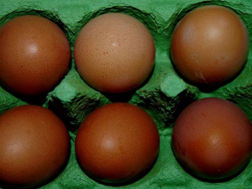 kiaušinis,kiaušinio plekšnė,kartonas,maistas,šeši