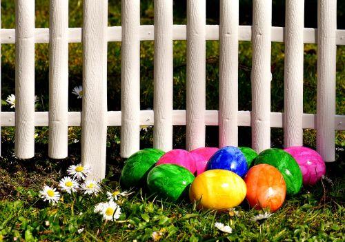 kiaušinis,spalvinga,Velykų kiaušiniai,pieva,tvora,Daisy,Velykos,virti kiaušiniai,spalvos,linksmų Velykų,spalvoti kiaušiniai,dažyti lengvi kiaušiniai,spalva,Velykų dekoracijos,spalvingi kiaušiniai