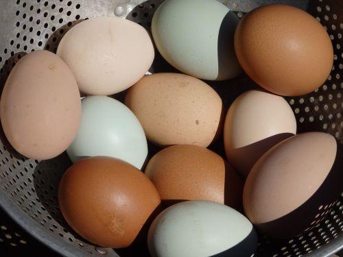 kiaušinis, Velykos, kiaušinio trynys, cholesterolis, kiaušinio plekšnė, vištiena, pusryčiai, sveikas, be honoraro mokesčio