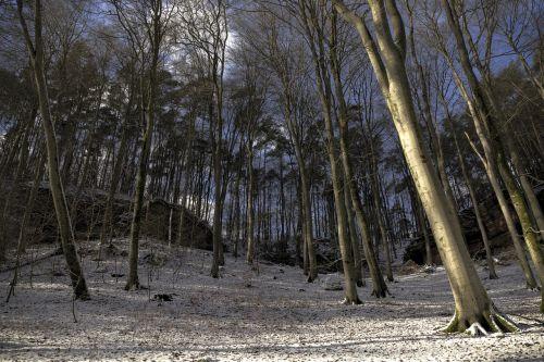 eifel,eifelsteig,žiema,kraštovaizdis,Gorge,medžiai,hdr