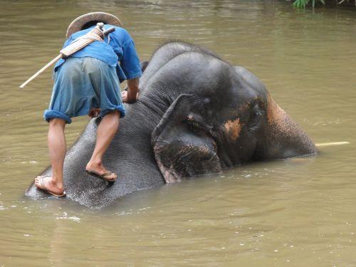 dramblys, blogai, Tailandas, lemputė