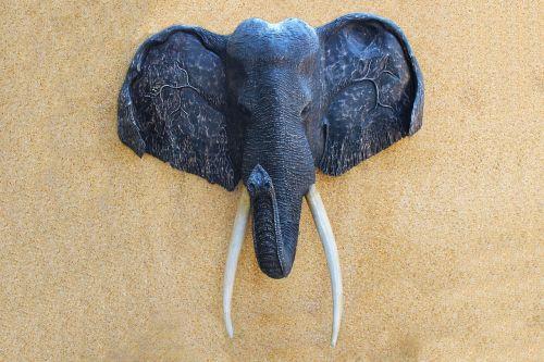 dramblio galva,sienų plokštelė,galva,gyvūnų galvą,trofėjus,medžioklė,gyvūnas,plokštelė,apdaila,siena,montuojamas,rinkimas,rodyti,didelės dramblys ausys,galva ant sienos,tusks,dramblys,skulptūra,bagažinė,veidas,Afrikos