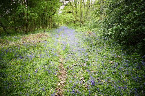 anglų kaimas,kaimas,vaikščioti,vakarų sussex,kraštovaizdis,gamta,žalias,mėlynos spalvos žiedai