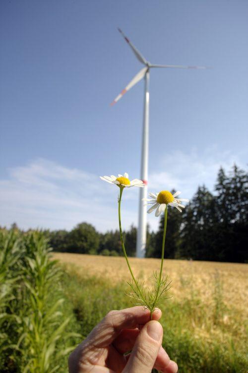 aplinkos apsauga,vėjo energija,vėjo energija,ekologinė energija,aplinkosaugos technologijos,aplinka,gėlė,ramunė,pinwheel,atsinaujinanti energija,elektros energijos gamyba,ekologiškas,ekologija,energija,energijos revoliucija,rotorius,Alternatyvi energija,vėjo jėgainė,vėjo generatorius,windräder,Vėjo turbina